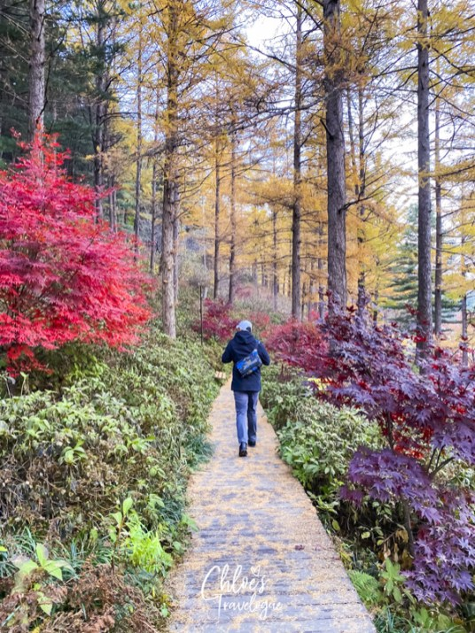 Garden of Morning Calm: Signature Gardens - Road to Heaven | #GardenofMorningCalm #AutumninKorea #Korea #Gapyeong