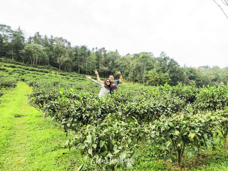 Sun Moon Lake Taiwan | Things to Do + Itinerary: Antique Assam Tea Farm | #SunMoonLakeTea #SunMoonLake #TaiwanItinerary #TaichungDayTrip