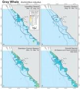73b-Gray Whale density