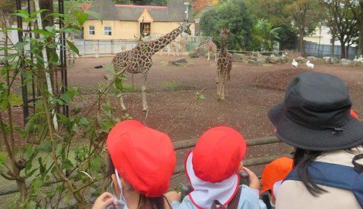 年少 多摩動物公園 遠足