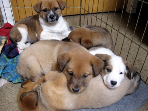 Milo's Sanctuary Puppies