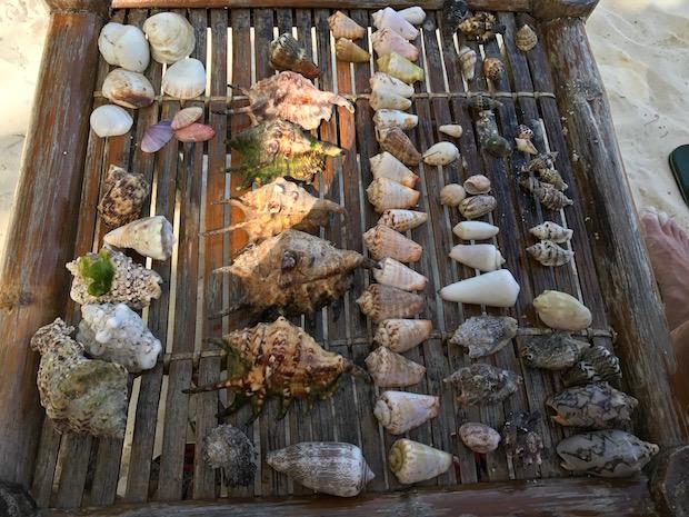 Muscheln Philippinen