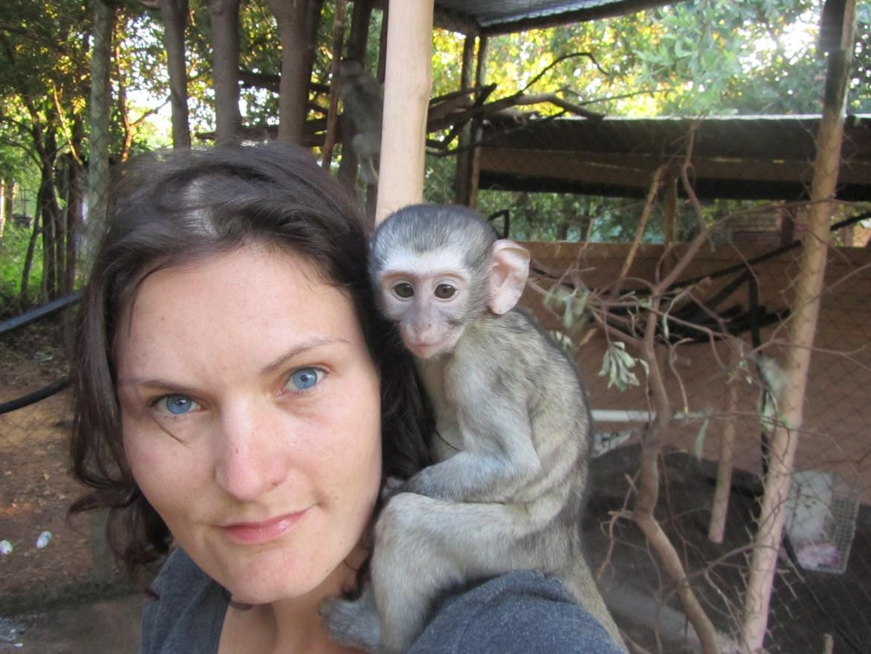 Suedafrika Monkeys
