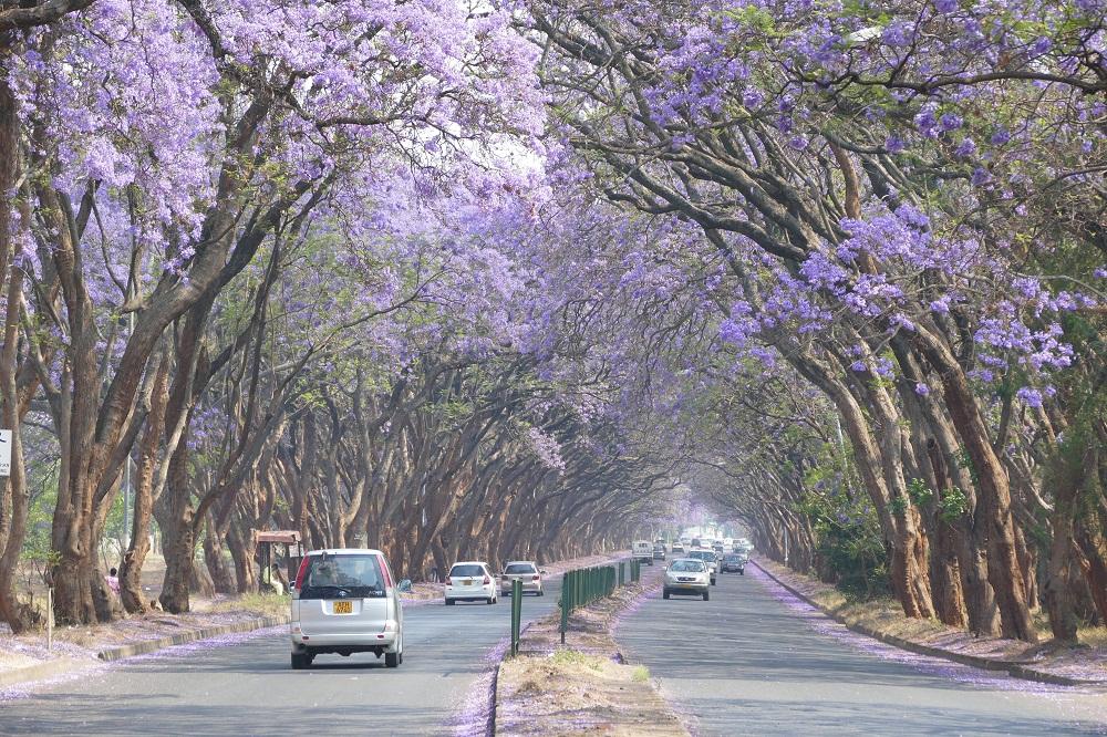 Simbabwe Harare Jacandara