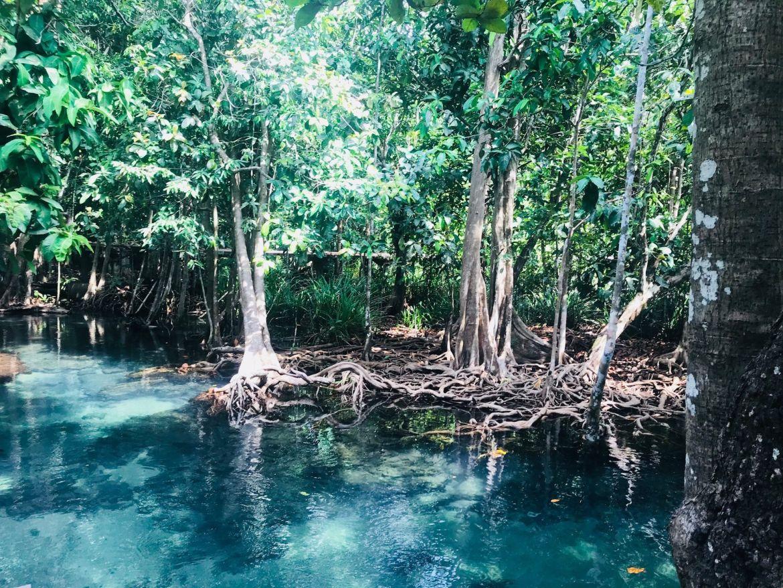 Mangroven in Thailand