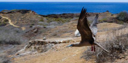 Punta Pitt Galapagos