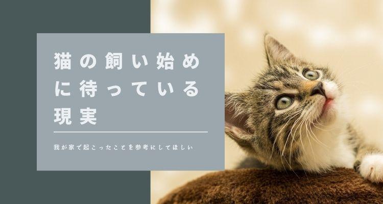猫の飼い始めに待っている現実