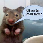Hamster Types | Choose Hamster Cages