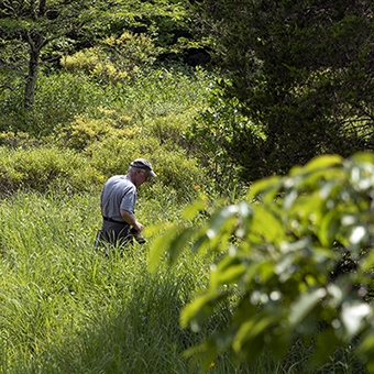 Doug Tallamy, renown entomologist, searches for caterpillars and other insects in the field.