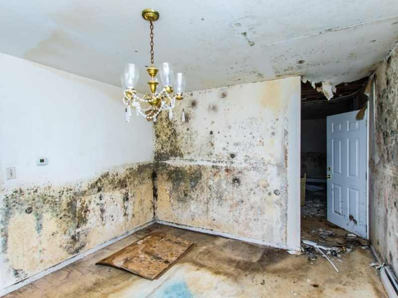 Image result for Health Hazards Of Unattended Mold In Your Home