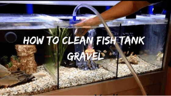 How To Clean Fish Tank Gravel Chooserly