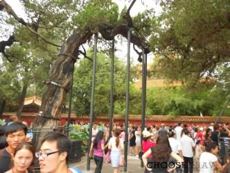 Popołudnie w chińskim parku