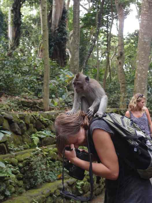 A monkey jumped on my head at Monkey Forest in Ubud, Bali, Indonesia