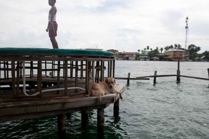 Lazy dog at Aqua Lounge in Bocas del Toro, Panama.