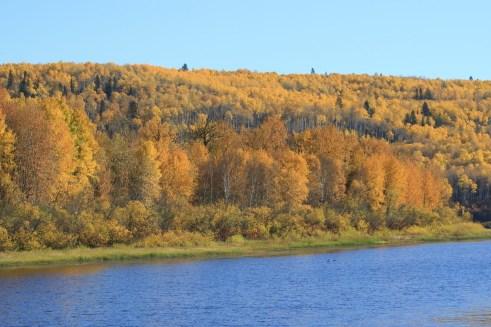 golden trees fall along river