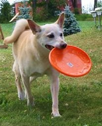 LADY loves catching frisbees