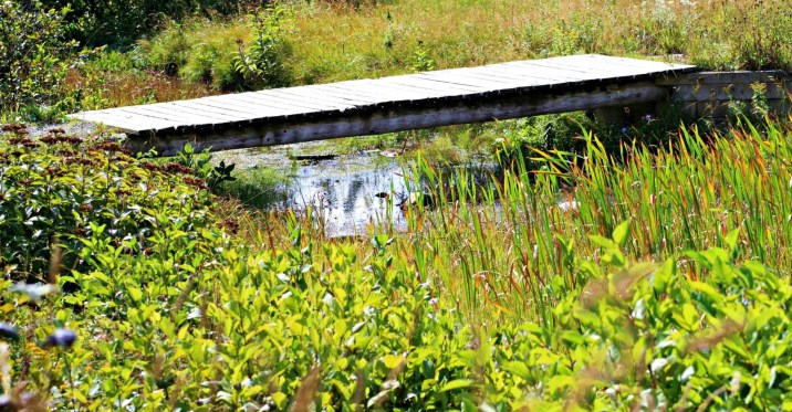 We Care nature trail in Stephenville NL a bridge across the creek