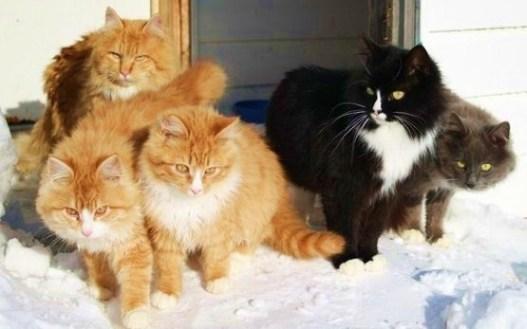 pops-cats