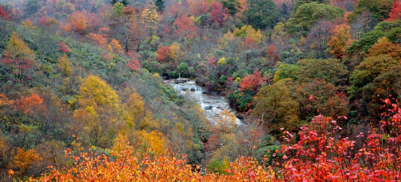 fall foliage festival the