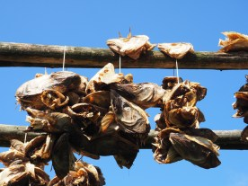 Stockfish heads for export to Nigeria