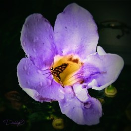A dark background, the soft purple and a tiny but delightful butterfly...