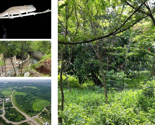 Natural Ecology. Choromanski Architects
