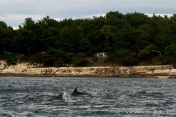 chorvatsko-dovolena-delfini