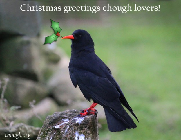 Seasons Greetings from Operation Chough