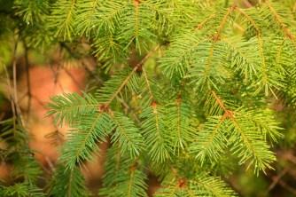 Soft Pines