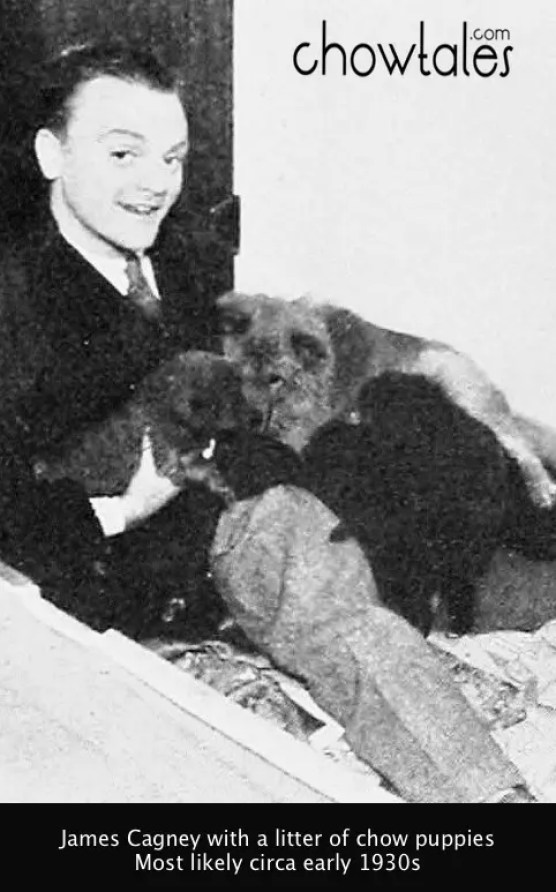James Cagney chow puppy litter