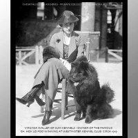 1919 WESTMINSTER BEST OF BREED – RARE PHOTO – CH. HOK LO FOO