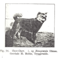 1900 FIRST CHOW SHOWN IN DENMARK