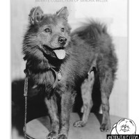 MING TOY-THE STORY OF A CHOW HEROINE
