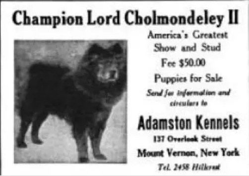 COUNTRY LIFE 1922  Bainbridge kennels R.S. Walsh -Adamston Kennels