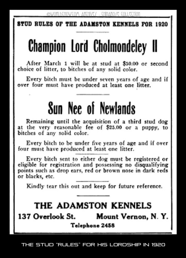 Stud ad for Lord Cholmondeley 1920