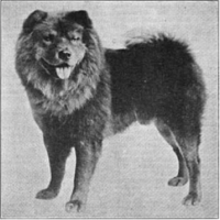 1917 TIME CAPSULE – CH. LORD CHOLMONDELEY