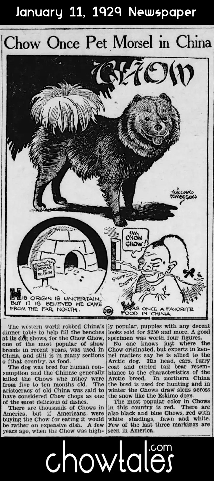 1929 PET MORSEL CHINA ARTICLE