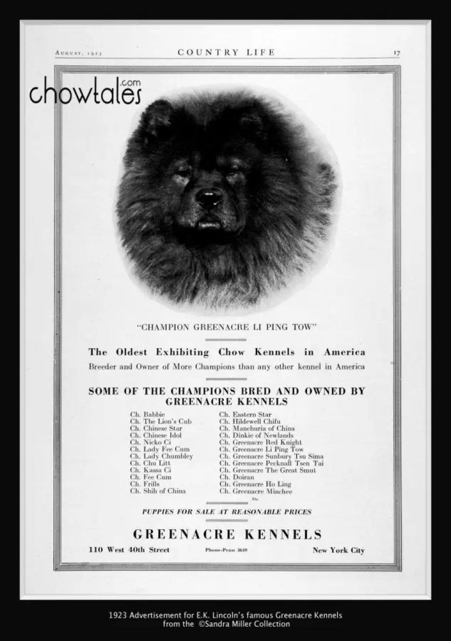 Greenacre Kennel Ad 1923 Listing all their major winners and producers
