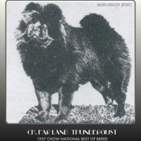 1930 TIME CAPSULE- CH. FAR LAND THUNDERGUST -3X National and Westminster winner