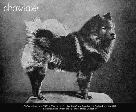 chow viii 1901