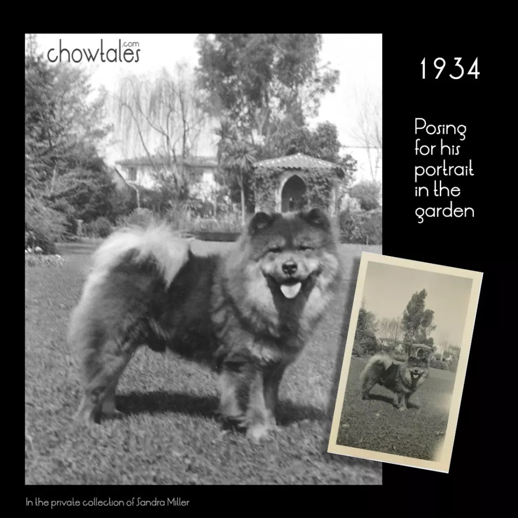 1934 Photo Chow in Garden collage