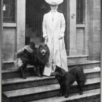 1913 ARTICLE – Show classes started for  chows with light shadings