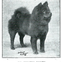 1880'S – 1930 – Chows in Profile – COLLECTION