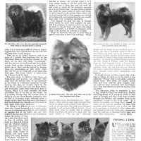 1911 Article – How to buy Chow Dogs in China