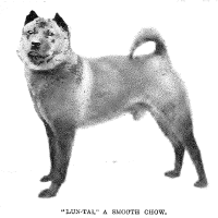 1898 – Lun Tai – Smooth chow China import – Miss Casella owner