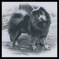 1922 CHOW NATIONAL WINNER- BLUE BOY- Very first blue chow to win this honor