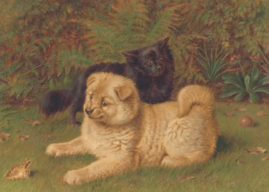 Cauldery Chow and Pomeranian in Garden