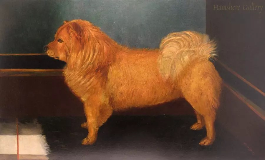 Chow Chow by B Griffiths Circa 1881