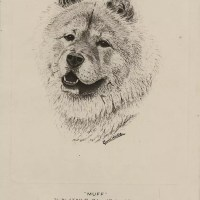 Artist – C. Francis Wardle – Portrait of Muff – Pet of T.R.H. Duke and Duchess of Kent