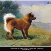 Artist – Archibald Thorburn (1860-1935)  Chow paintings
